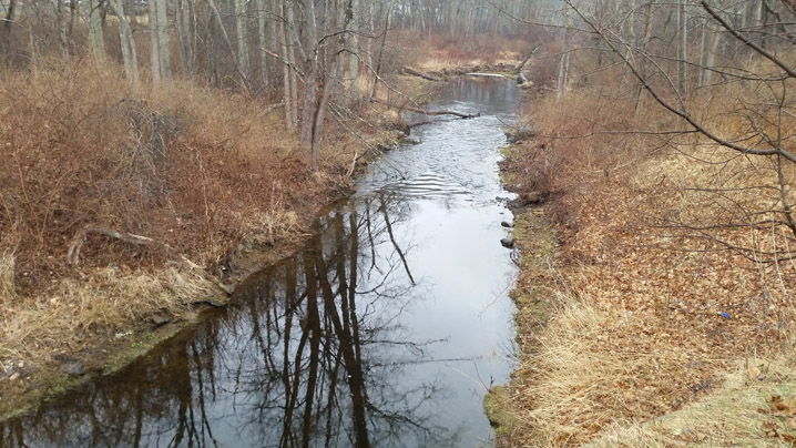 The Miles River at County Rd., just before it joins the Ipswich River