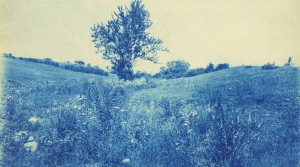 Cyanotype by Arthur Wesley Dow
