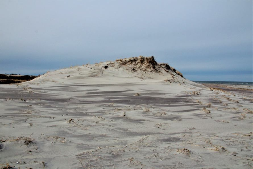 The Great Dune, photo by Plum Island and Beyond February 2021