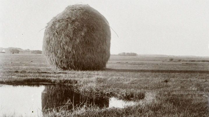 Gathering salt marsh hay
