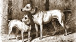 A short history of dog laws