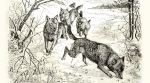 Sketch of wolves by Walter Heubach